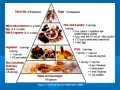 Food Pyramid With Labels