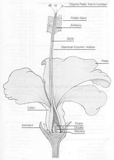 Female Reproductive System: Diagram, Functions, Anatomy
