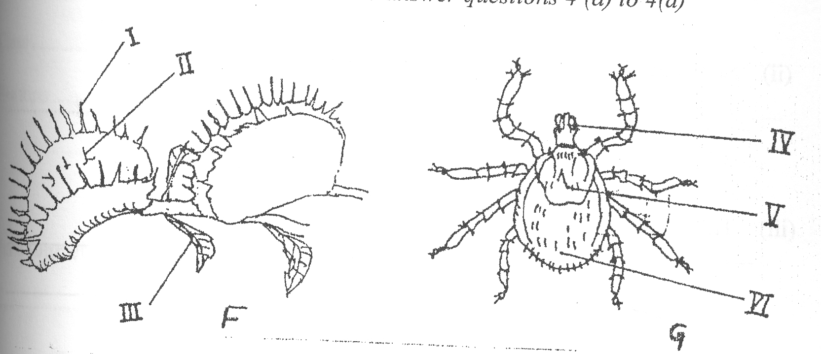 Labelled Diagram Of A Tick Scan0010