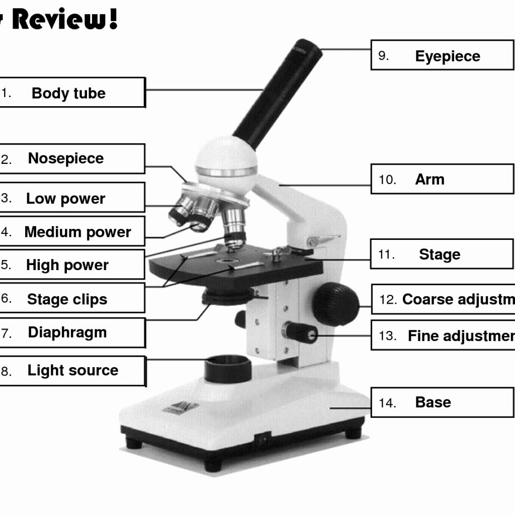 Interactive Microscope Labeling Games - Top Label Maker